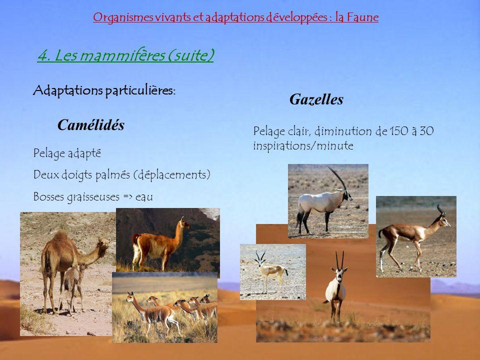 Organismes vivants et adaptations développées : la Faune 4. Les mammifères (suite) Adaptations particulières: Camélidés Gazelles Pelage adapté Deux do