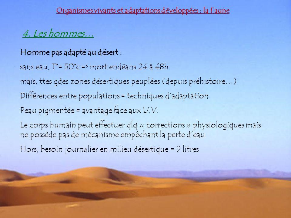 Organismes vivants et adaptations développées : la Faune 4. Les hommes… Homme pas adapté au désert : sans eau, T°= 50°c => mort endéans 24 à 48h mais,