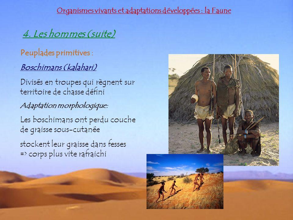 Organismes vivants et adaptations développées : la Faune Peuplades primitives : Boschimans (kalahari) Divisés en troupes qui règnent sur territoire de