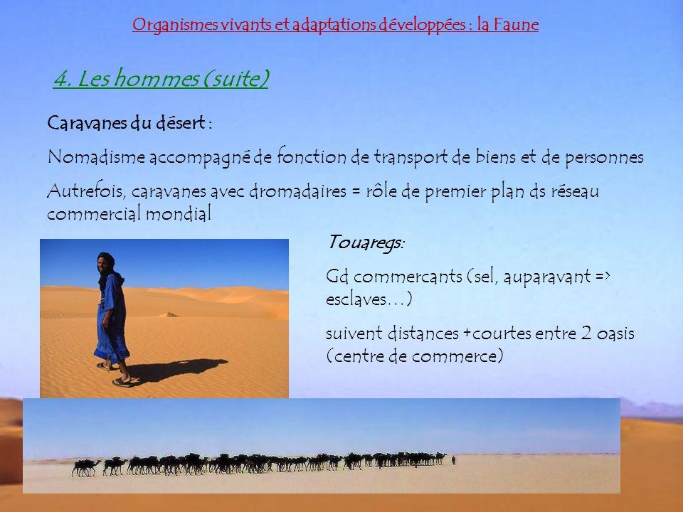 Organismes vivants et adaptations développées : la Faune 4. Les hommes (suite) Caravanes du désert : Nomadisme accompagné de fonction de transport de
