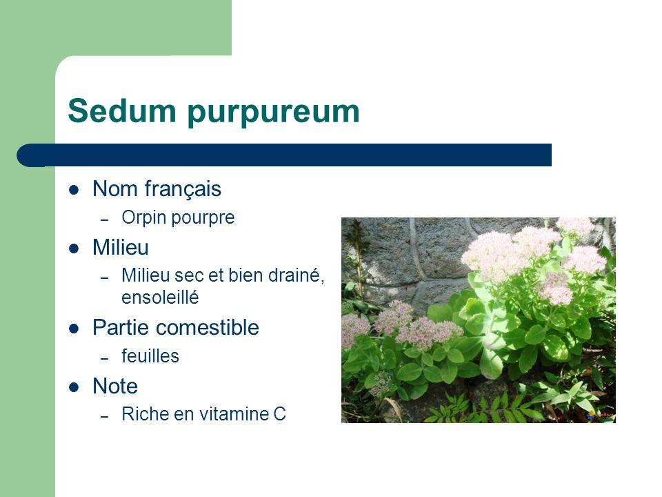 Portulaca oleracea Nom français – Pourpier commun Milieu – Riche et ensoleillé Partie comestible – Feuilles, graines (farine) Note – Riche en vitamines, sels minéraux