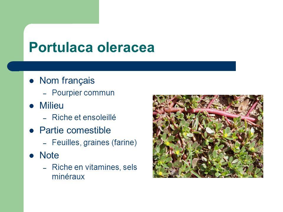 Portulaca oleracea Nom français – Pourpier commun Milieu – Riche et ensoleillé Partie comestible – Feuilles, graines (farine) Note – Riche en vitamine