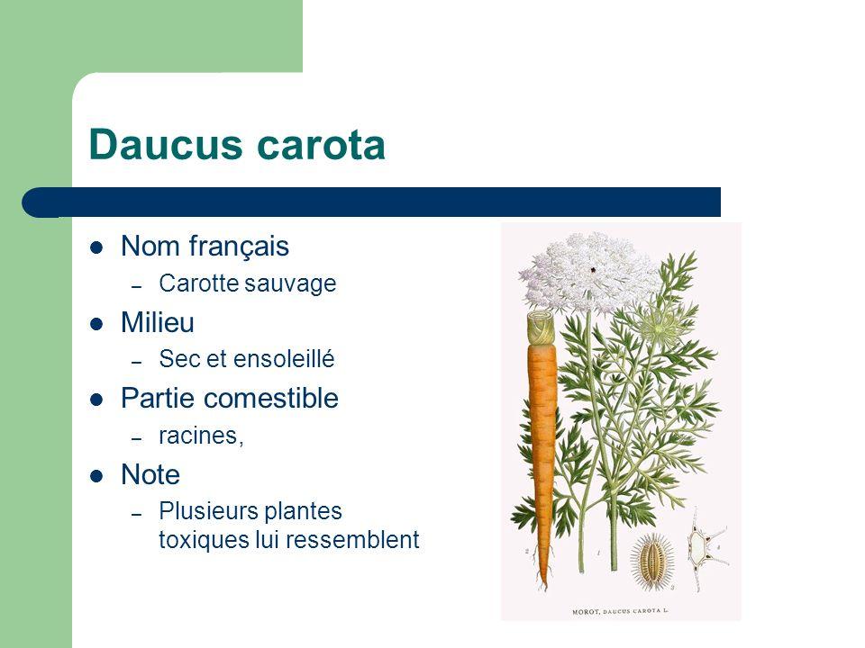Sambucus canadensis Nom français – Sureau blanc Milieu – Riche, humide, ombragé Partie comestible – Fleurs, fruits mûrs Note – Arbuste à oiseaux