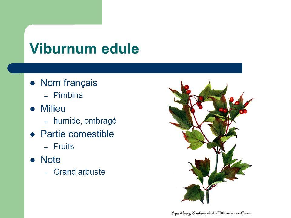 Viburnum edule Nom français – Pimbina Milieu – humide, ombragé Partie comestible – Fruits Note – Grand arbuste
