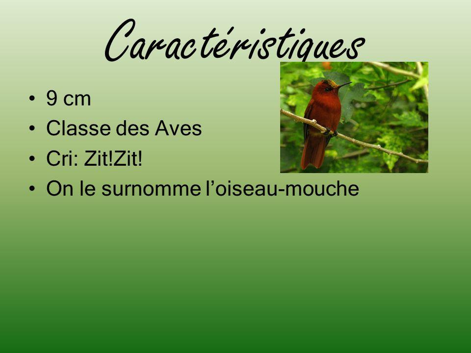 Caractéristiques 9 cm Classe des Aves Cri: Zit!Zit! On le surnomme loiseau-mouche