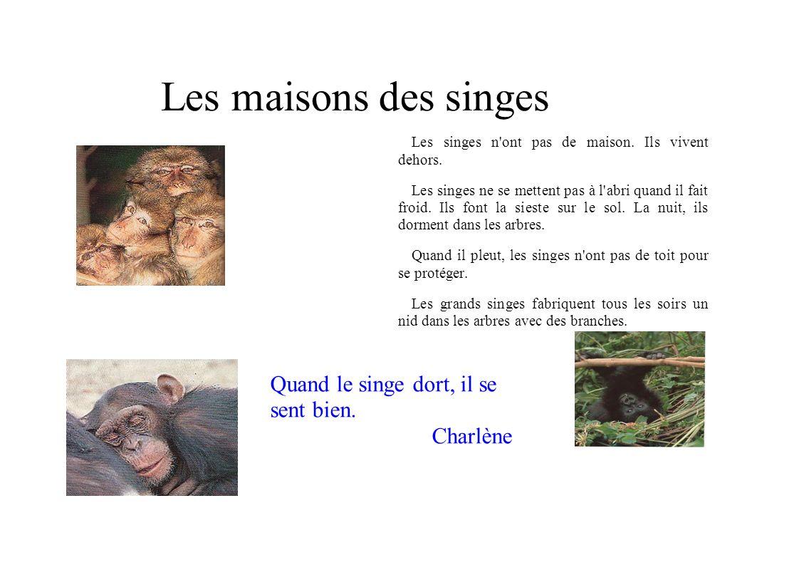 Les maisons des singes Les singes n'ont pas de maison. Ils vivent dehors. Les singes ne se mettent pas à l'abri quand il fait froid. Ils font la siest
