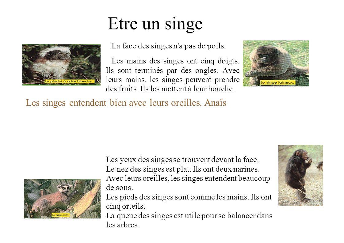 Les singes et leurs mères Les mères singes ont souvent un petit à la fois. Le petit singe a besoin de sa maman pendant six ou sept ans. Le bébé singe