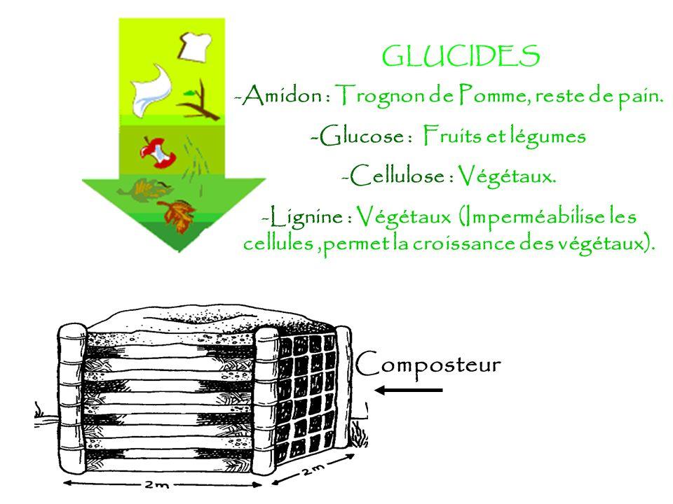GLUCIDES -Amidon : Trognon de Pomme, reste de pain. -Glucose : Fruits et légumes -Cellulose : Végétaux. -Lignine : Végétaux (Imperméabilise les cellul