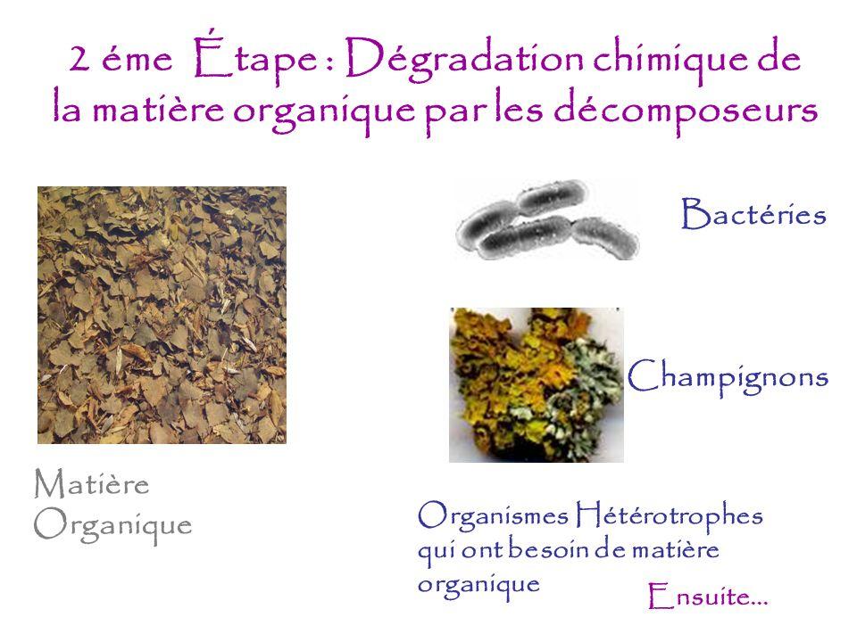 2 éme Étape : Dégradation chimique de la matière organique par les décomposeurs Ensuite... Bactéries Champignons Matière Organique Organismes Hétérotr