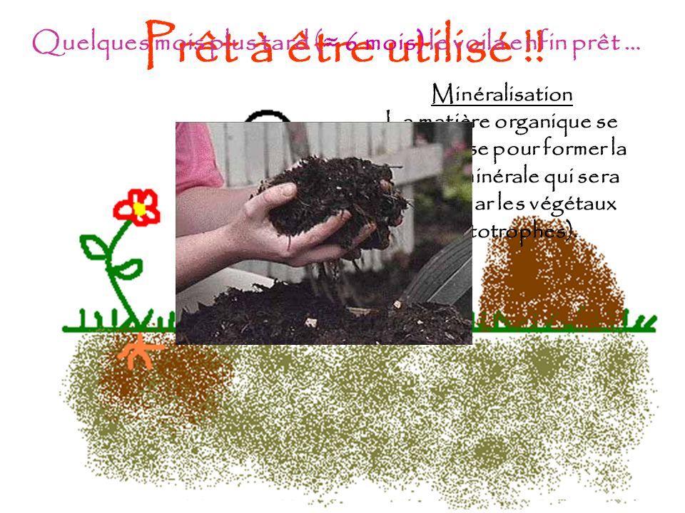 Prêt à être utilisé !! Minéralisation La matière organique se décompose pour former la matière minérale qui sera utilisée par les végétaux (Autotrophe