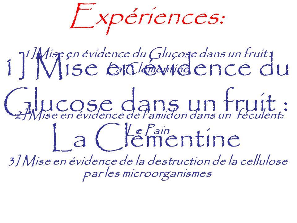 Expériences: 1]Mise en évidence du Glucose dans un fruit : La Clémentine 2] Mise en évidence de lamidon dans un féculent: Le Pain 3] Mise en évidence