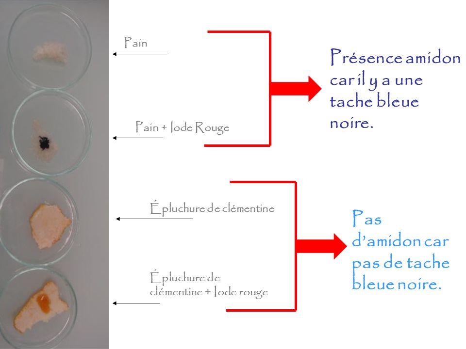 Pain Pain + Iode Rouge Épluchure de clémentine Épluchure de clémentine + Iode rouge Présence amidon car il y a une tache bleue noire. Pas damidon car