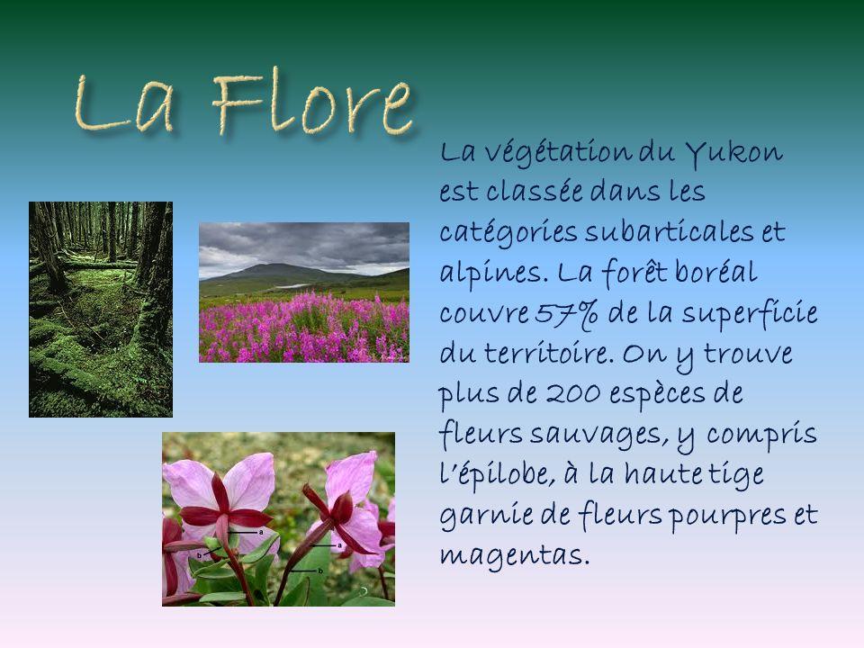 La végétation du Yukon est classée dans les catégories subarticales et alpines. La forêt boréal couvre 57% de la superficie du territoire. On y trouve