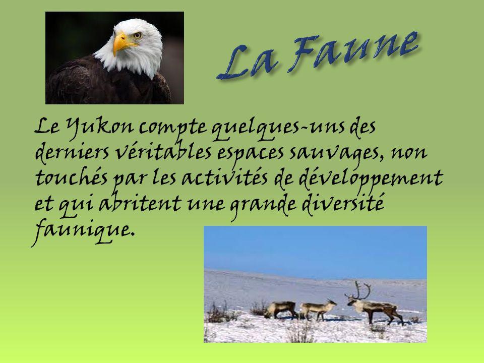 La végétation du Yukon est classée dans les catégories subarticales et alpines.