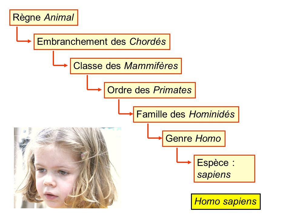 Règne Animal Embranchement des ChordésClasse des MammifèresOrdre des PrimatesFamille des HominidésGenre HomoEspèce : sapiens Homo sapiens