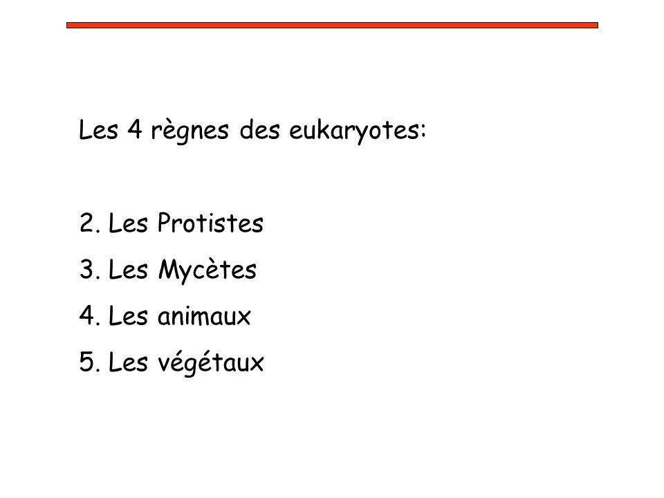 Les 4 règnes des eukaryotes: 2. Les Protistes 3. Les Mycètes 4. Les animaux 5. Les végétaux