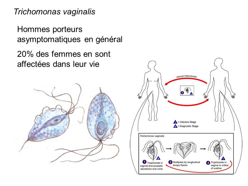 Trichomonas vaginalis Hommes porteurs asymptomatiques en général 20% des femmes en sont affectées dans leur vie