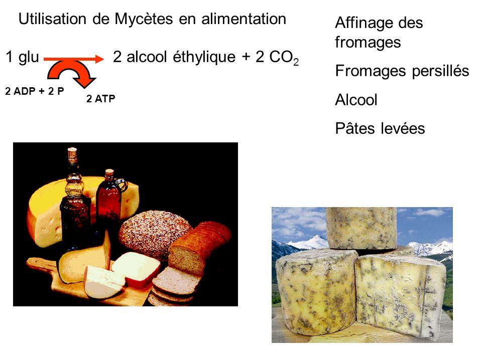 Utilisation de Mycètes en alimentation Affinage des fromages Fromages persillés Alcool Pâtes levées 2 alcool éthylique + 2 CO 2 2 ADP + 2 P 2 ATP 1 gl