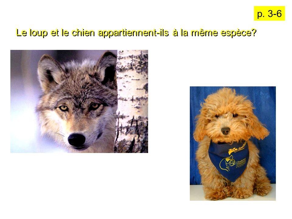 Le loup et le chien appartiennent-ils à la même espèce? p. 3-6