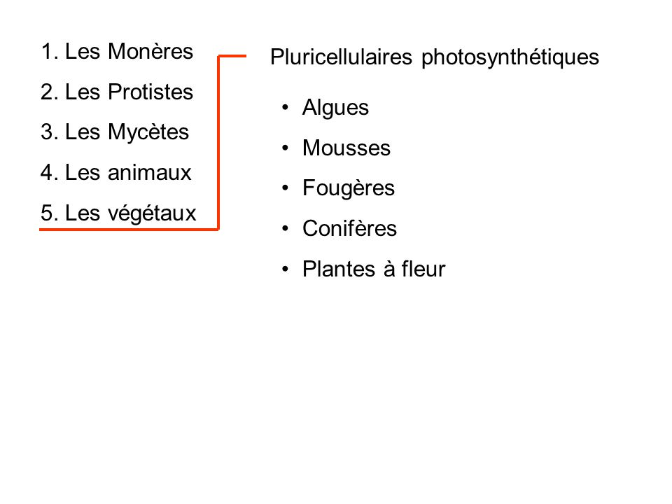 1. Les Monères 2. Les Protistes 3. Les Mycètes 4. Les animaux 5. Les végétaux Pluricellulaires photosynthétiques Algues Mousses Fougères Conifères Pla