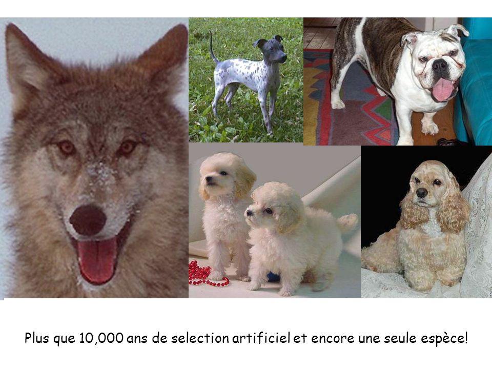 Plus que 10,000 ans de selection artificiel et encore une seule espèce!