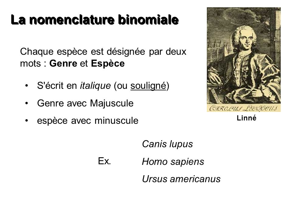 La nomenclature binomiale Chaque espèce est désignée par deux mots : Genre et Espèce S'écrit en italique (ou souligné) Genre avec Majuscule espèce ave
