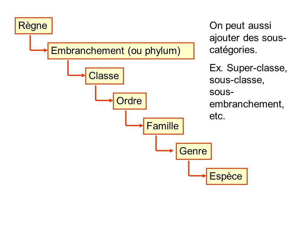 Règne Embranchement (ou phylum) On peut aussi ajouter des sous- catégories. Ex. Super-classe, sous-classe, sous- embranchement, etc. ClasseEspèceOrdre
