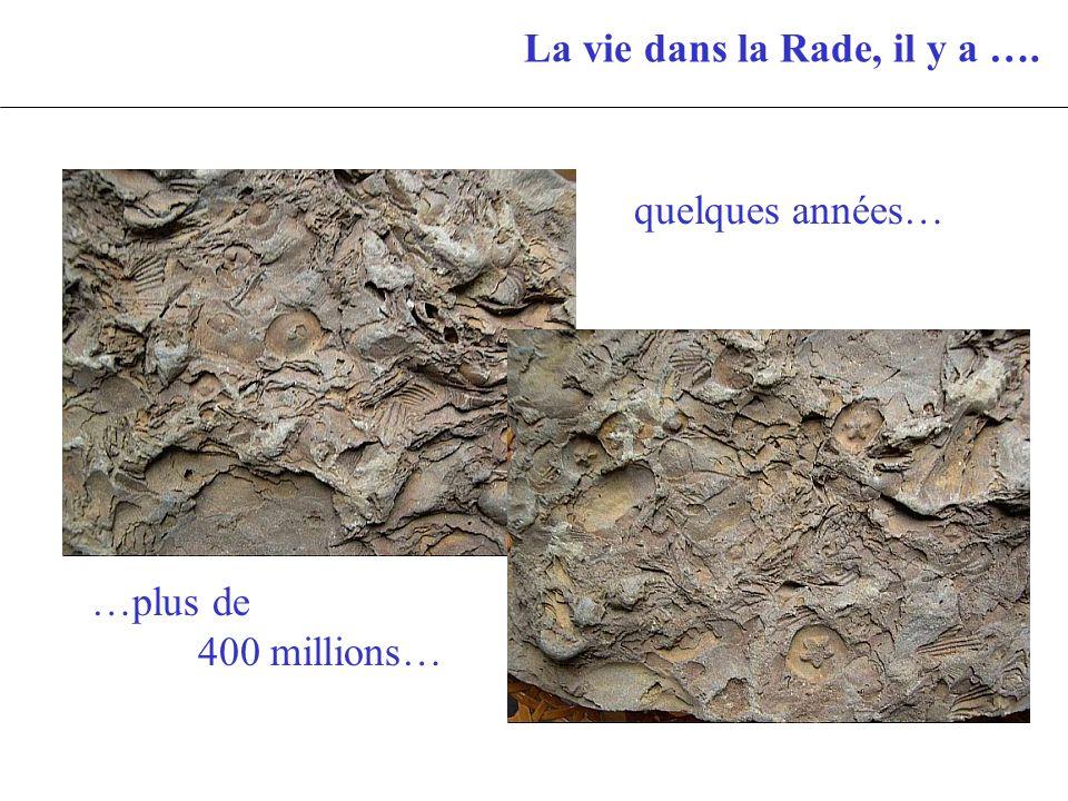 La vie dans la Rade, il y a …. quelques années… …plus de 400 millions…