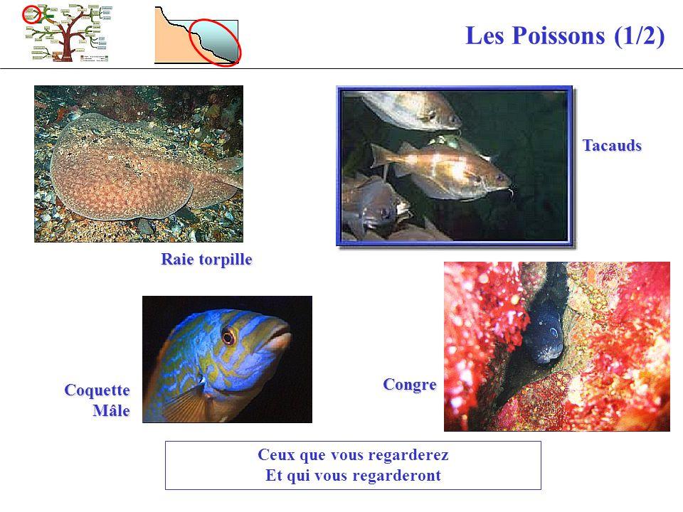 Les Poissons (1/2) Ceux que vous regarderez Et qui vous regarderont Congre Raie torpille Tacauds Coquette Mâle