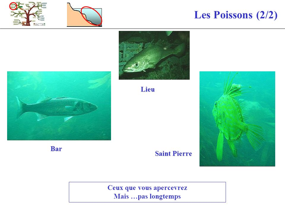 Les Poissons (2/2) Ceux que vous apercevrez Mais …pas longtemps Bar Lieu Saint Pierre