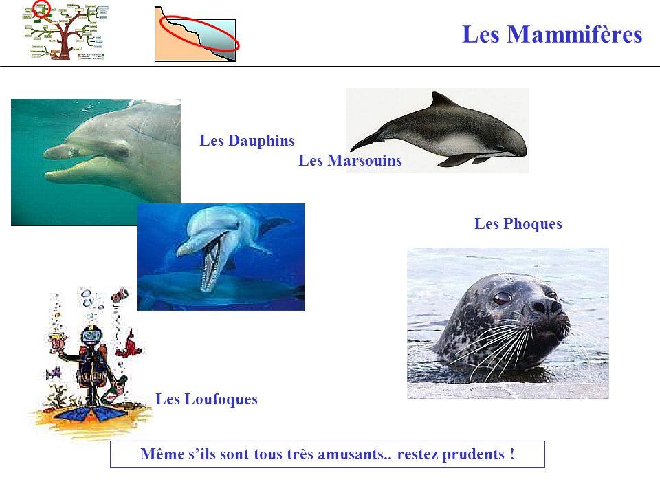 Les Mammifères Les Loufoques Les Dauphins Les Marsouins Même sils sont tous très amusants.. restez prudents ! Les Phoques
