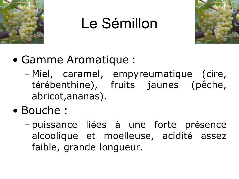 Le Sémillon Gamme Aromatique : –Miel, caramel, empyreumatique (cire, t é r é benthine), fruits jaunes (pêche, abricot,ananas). Bouche : –puissance li