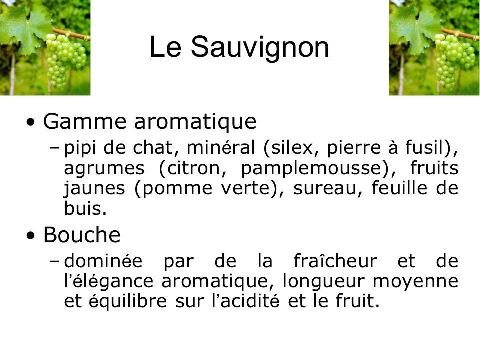 Le Sauvignon Gamme aromatique –pipi de chat, min é ral (silex, pierre à fusil), agrumes (citron, pamplemousse), fruits jaunes (pomme verte), sureau, f