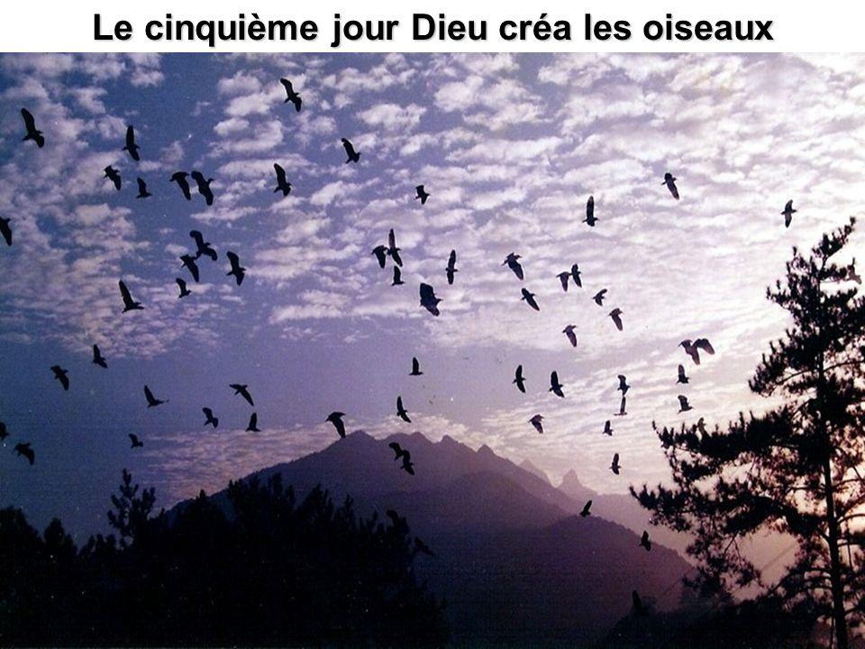 Le cinquième jour Dieu créa les oiseaux