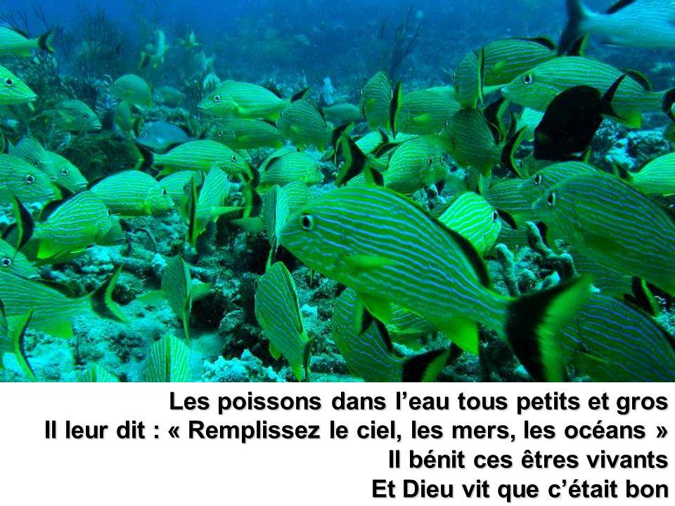 Les poissons dans leau tous petits et gros Il leur dit : « Remplissez le ciel, les mers, les océans » Il bénit ces êtres vivants Et Dieu vit que cétai