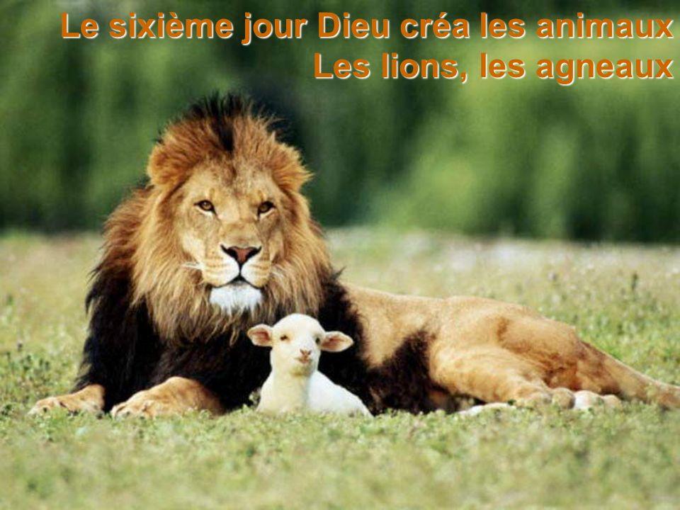 Le sixième jour Dieu créa les animaux Les lions, les agneaux