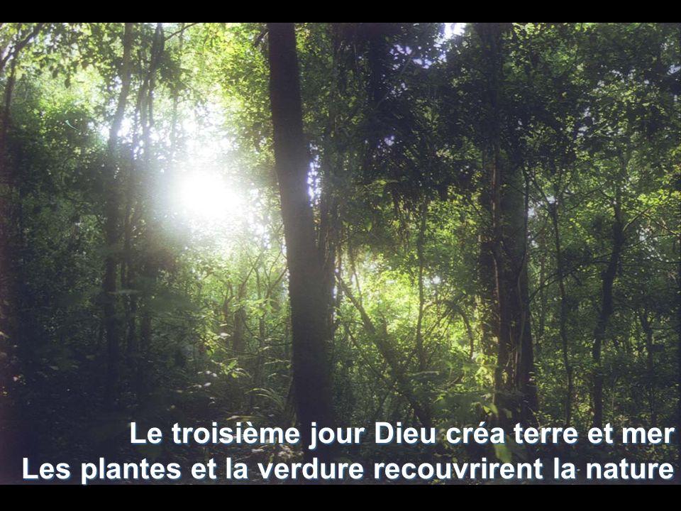 Le troisième jour Dieu créa terre et mer Les plantes et la verdure recouvrirent la nature