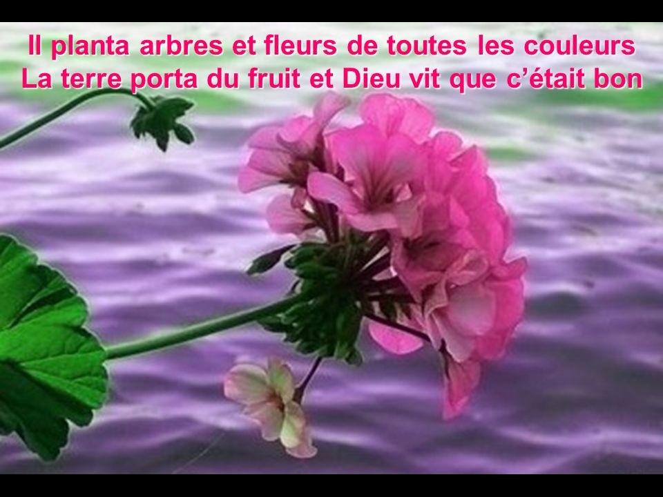 Il planta arbres et fleurs de toutes les couleurs La terre porta du fruit et Dieu vit que cétait bon