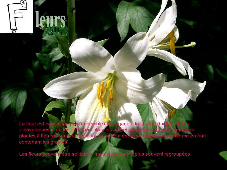 La fleur est constituée par lensemble des organes de la reproduction et des « enveloppes » qui les entourent chez les angiospermes (également appelées