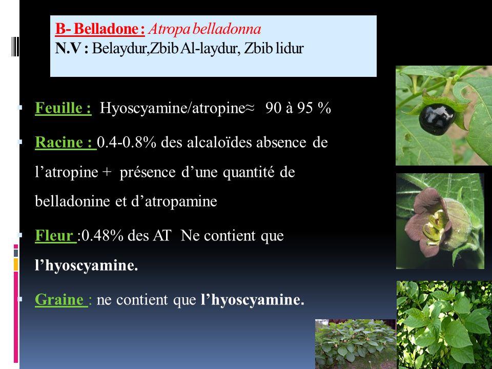 Utilisation de la plante : Jardinage : lutte contre les doryphoresdoryphores Utilisation médicinale : effets antispasmodiques et sédatifs du SNCantisp