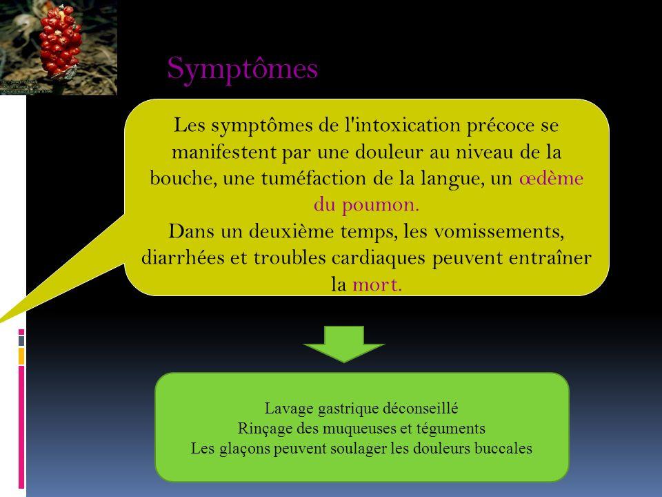 A. Arum tacheté (Arum maculatum/ Aracées) Aracées Utilisation officinale : tonique cutané expectorante. culinaire: aliment. Bgouga 3.3. Autres: Princi