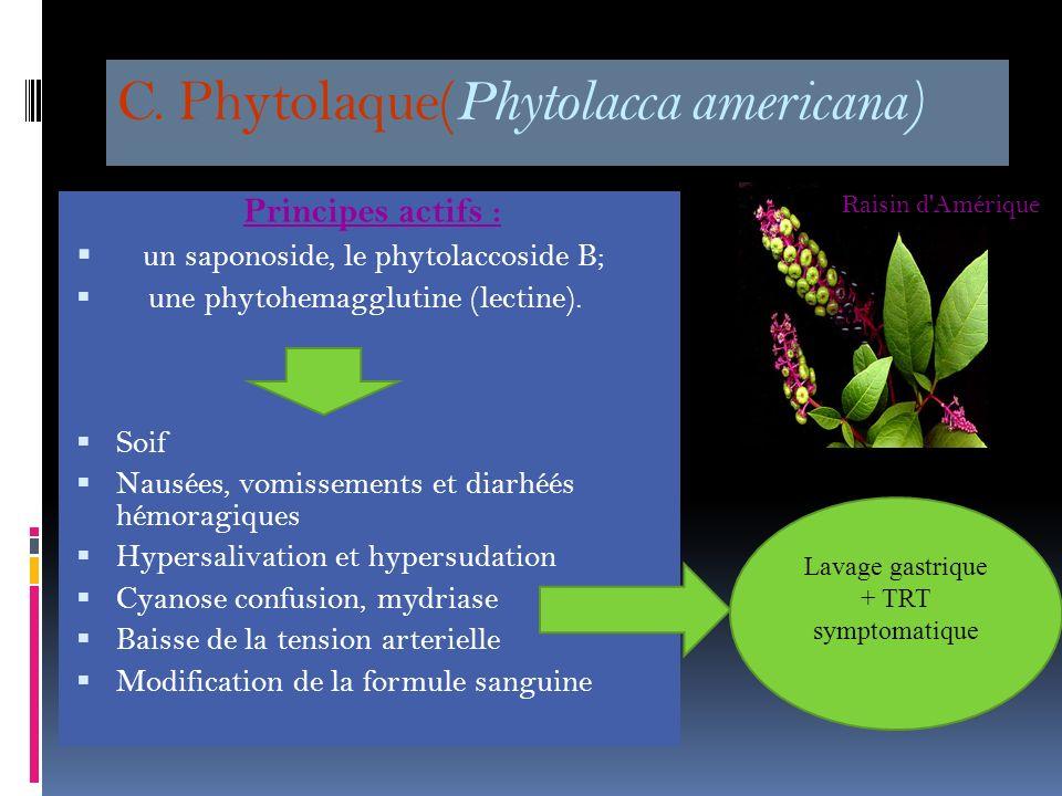 B. Oreille déléphant Alocasia sp plante dornementation Signes précoces: sensation de brûlure au niveau de la cavité buccale avec hypersalivation. Dans