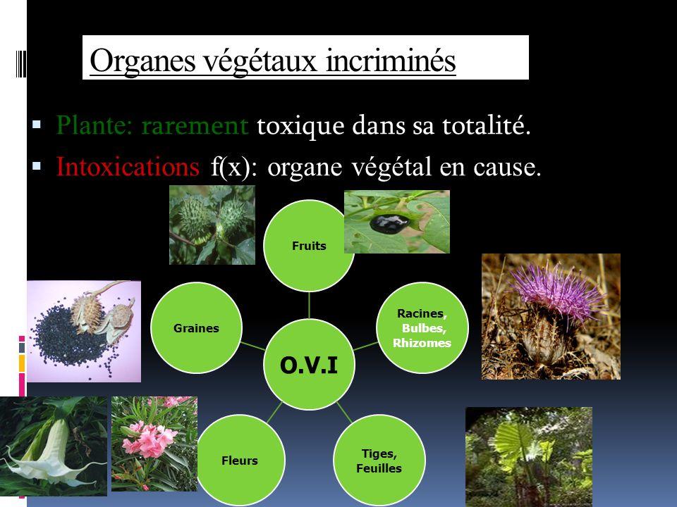 Organes végétaux incriminés Plante: rarement toxique dans sa totalité.