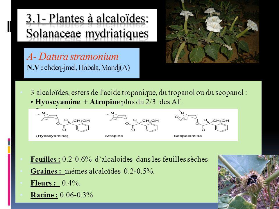 3 alcaloïdes, esters de l acide tropanique, du tropanol ou du scopanol : Hyoscyamine + Atropine plus du 2/3 des AT.