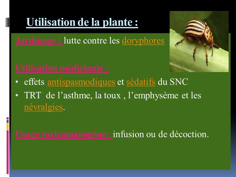 Utilisation de la plante : Jardinage : lutte contre les doryphoresdoryphores Utilisation médicinale : effets antispasmodiques et sédatifs du SNCantispasmodiquessédatifs TRT de lasthme, la toux, lemphysème et les névralgies.