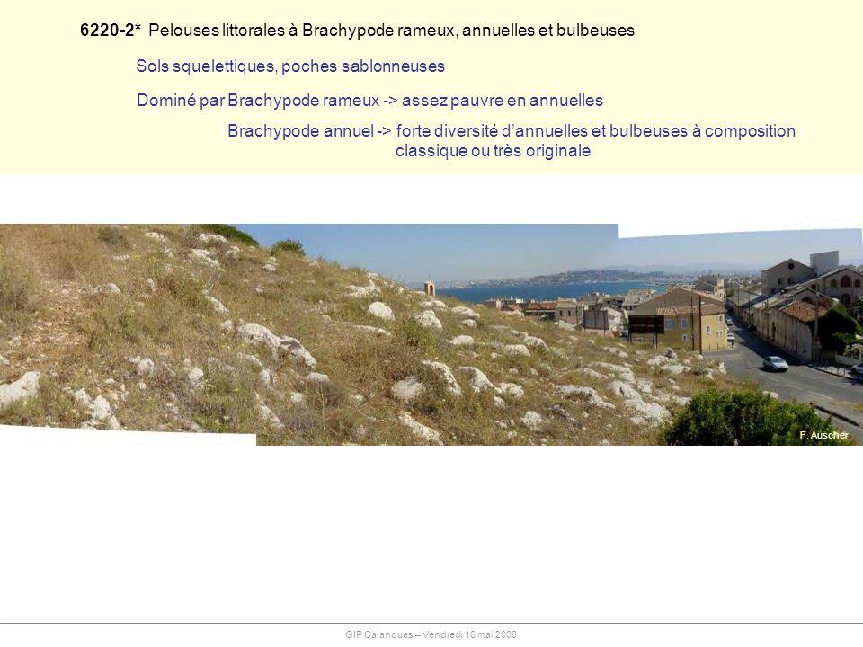 6220-2* Pelouses littorales à Brachypode rameux, annuelles et bulbeuses Sols squelettiques, poches sablonneuses Dominé par Brachypode rameux -> assez