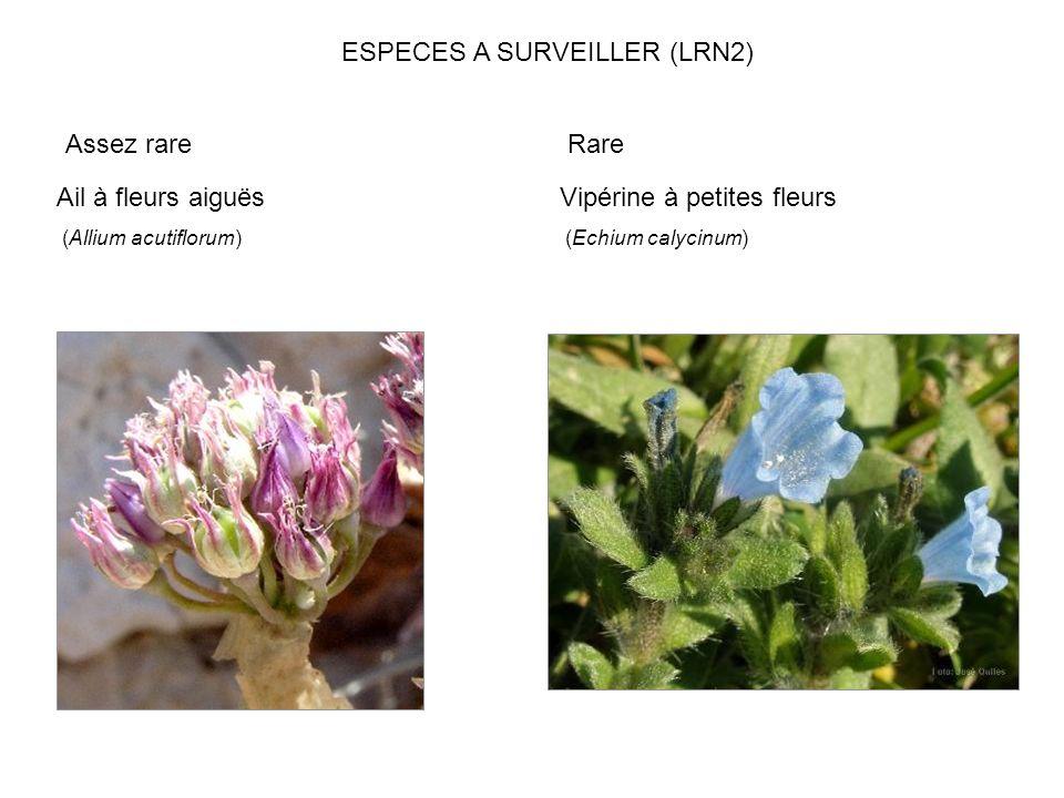 Ail à fleurs aiguës (Allium acutiflorum) Vipérine à petites fleurs (Echium calycinum) Assez rare ESPECES A SURVEILLER (LRN2) Rare