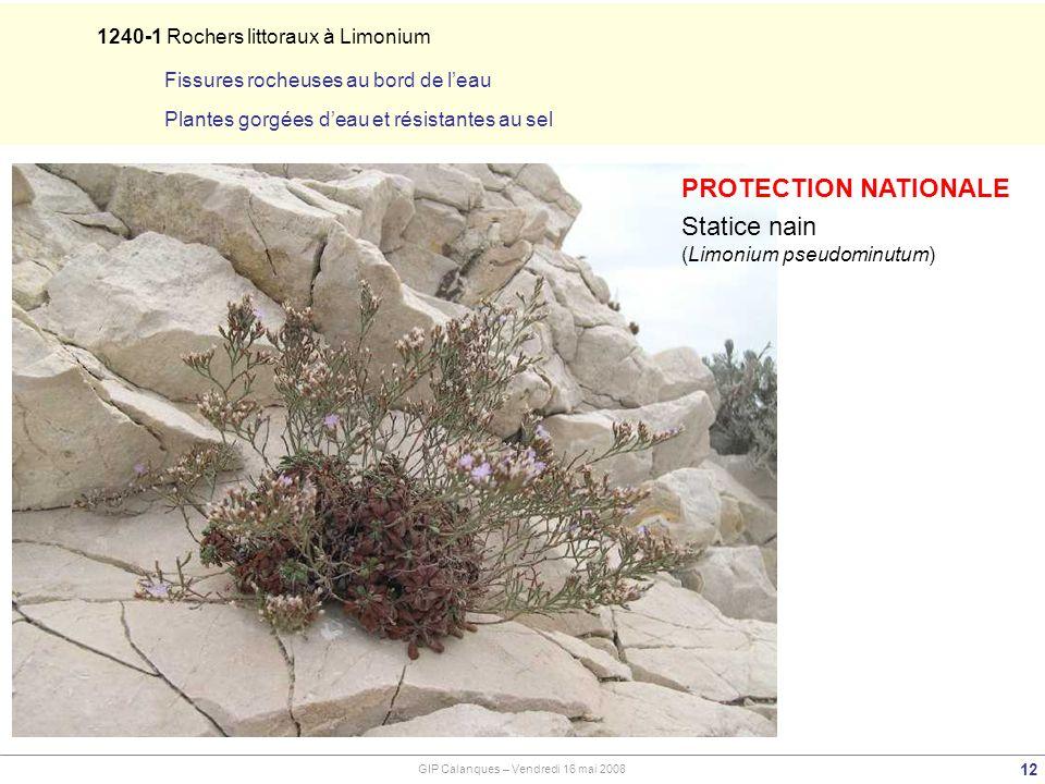 12 GIP Calanques – Vendredi 16 mai 2008 PROTECTION NATIONALE Statice nain (Limonium pseudominutum) 1240-1 Rochers littoraux à Limonium Fissures rocheuses au bord de leau Plantes gorgées deau et résistantes au sel