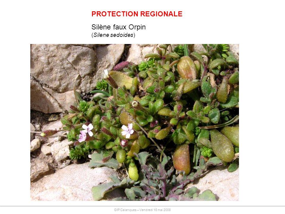 PROTECTION REGIONALE Silène faux Orpin (Silene sedoides)