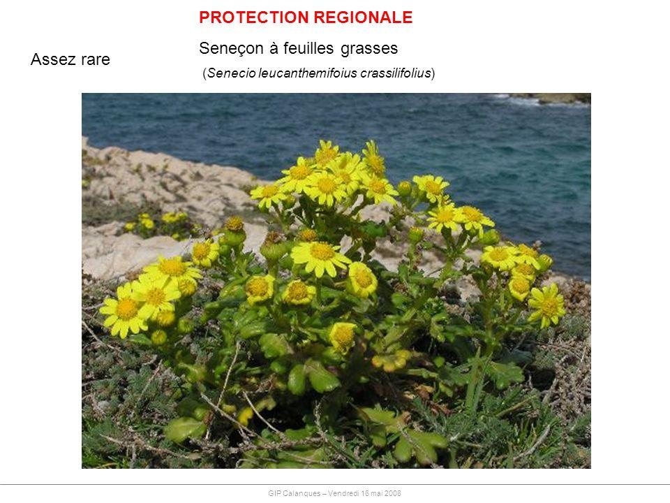 GIP Calanques – Vendredi 16 mai 2008 PROTECTION REGIONALE Seneçon à feuilles grasses (Senecio leucanthemifoius crassilifolius) Assez rare